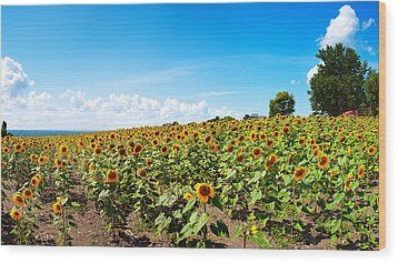 Wood Print featuring the photograph Sunflowers In Ithaca New York by Paul Ge