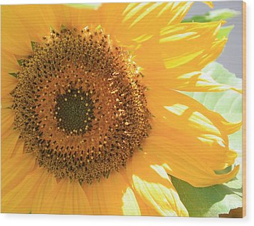 Sunflowers  Wood Print by Marna Edwards Flavell