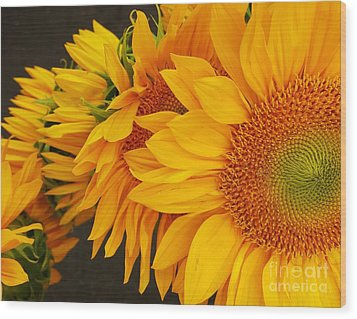Sunflowers Train Wood Print by Jasna Gopic