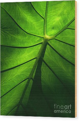 Sunglow Green Leaf Wood Print by Patricia L Davidson