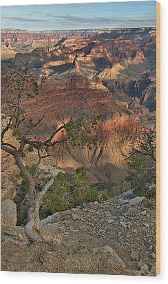 Wood Print featuring the photograph Sunkissed Canyon by Stephen  Vecchiotti