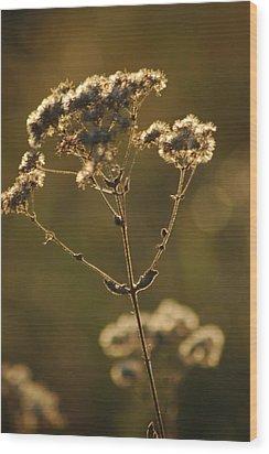 Sunkissed Wood Print by Lori Mellen-Pagliaro