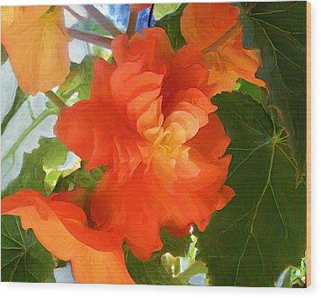 Sunkissed Orange Begonias Wood Print