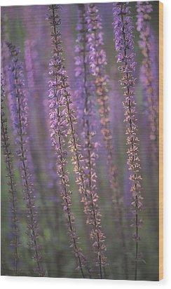 Sunlight On Lavender Wood Print