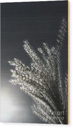 Sunlight Grass Wood Print by Steve Augustin