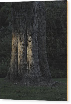 Sunlight On Treetrunk Wood Print by Barry Culling