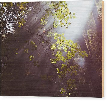 Wood Print featuring the photograph Sunlit Beauty by Lora Lee Chapman