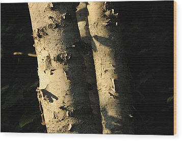 Sunlit Birch Wood Print by Gerald Hiam
