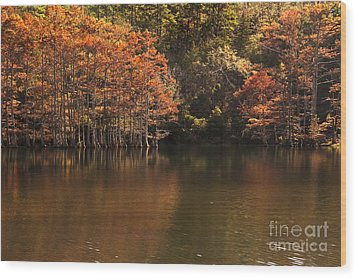 Wood Print featuring the photograph Sunlit Cypress Trees On Beaver's Bend by Tamyra Ayles