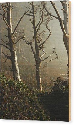 Sunlit Morning Wood Print by Lori Mellen-Pagliaro