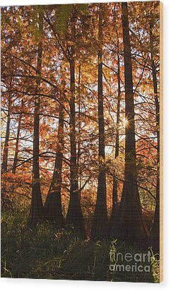 Wood Print featuring the photograph Sunlit Trees At Lake Murray by Tamyra Ayles