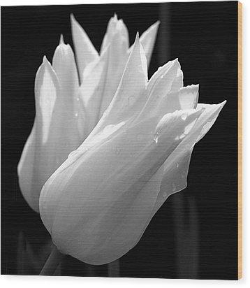 Sunlit White Tulips Wood Print by Rona Black