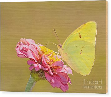 Sunlit Yellow Wood Print