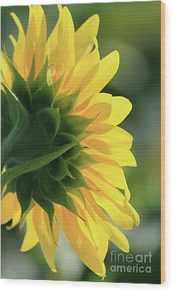 Sunlite Sunflower Wood Print