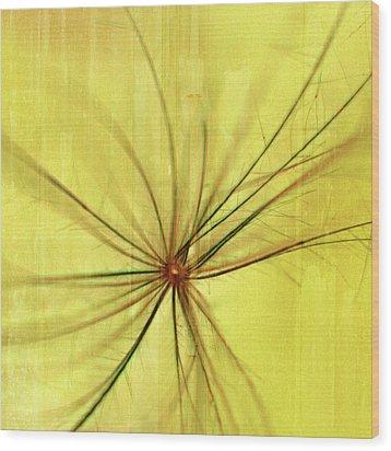 Sunny Wood Print by Bonnie Bruno