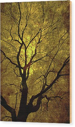 Wood Print featuring the painting Sunny Branches by Gray  Artus