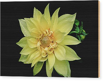 Wood Print featuring the photograph Sunny Dahlia by Julie Palencia