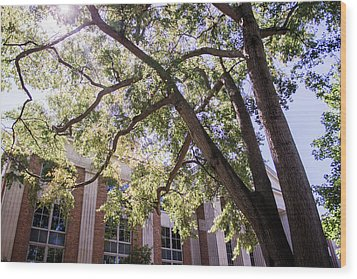 Wood Print featuring the photograph Sunny Days At Uga by Parker Cunningham