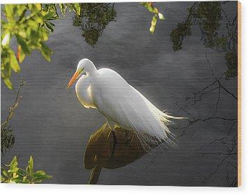 Sunny Egret Wood Print
