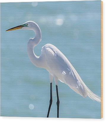 Wood Print featuring the photograph Sunny Egret by Steven Sparks
