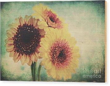 Sunny Gerbera Wood Print by Angela Doelling AD DESIGN Photo and PhotoArt