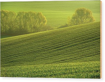 Wood Print featuring the photograph Sunny Green by Jenny Rainbow