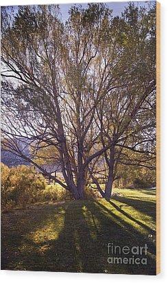 Sunny Mono Tree Wood Print by Norman  Andrus