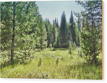 Sunny Mountain Meadow - Landscape Photograph Wood Print by Ann Powell