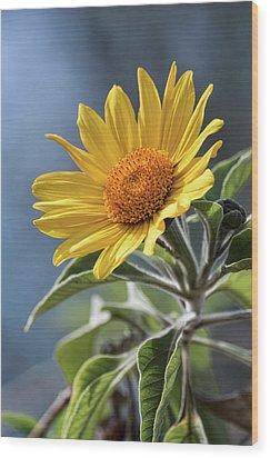 Wood Print featuring the photograph Sunny Side Up  by Saija Lehtonen