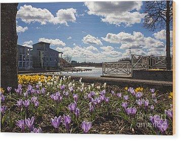 Sunny Spring Flowers In Helsinki Wood Print
