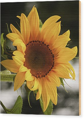 Wood Print featuring the photograph Sunny Sunflower by Jordan Blackstone