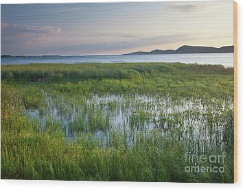 Wood Print featuring the photograph Sunrise At Sandbar  by Susan Cole Kelly