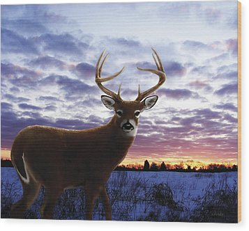 Sunrise Buck Wood Print by Barbara Hymer