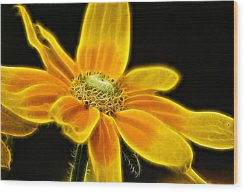 Wood Print featuring the photograph Sunrise Daisy by Cameron Wood