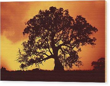 Sunrise Gum Wood Print by Mike  Dawson