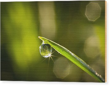 Wood Print featuring the photograph Sunrise In A Dewdrop by Monte Stevens