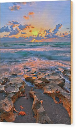 Sunrise Over Carlin Park In Jupiter Florida Wood Print