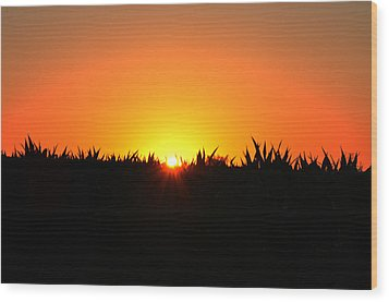 Sunrise Over Corn Field Wood Print by Bill Cannon