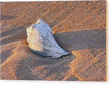 Sunrise Seashell Wood Print