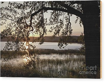 Wood Print featuring the photograph Sunrise Silhouette by Susan Cole Kelly