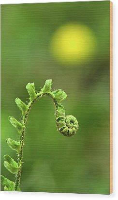 Sunrise Spiral Fern Wood Print by Christina Rollo