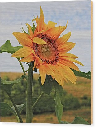 Sunrise Sunflower Wood Print