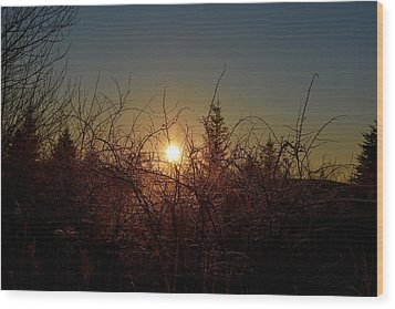 Sunrise Thru The Brush Wood Print
