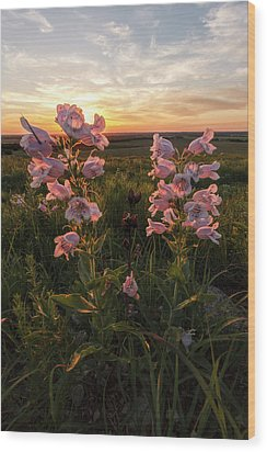 Sunset And Penstemon Wood Print