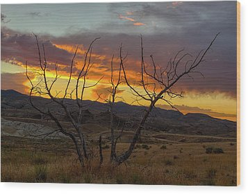 Sunset And Petrified Tree Wood Print by David Gn