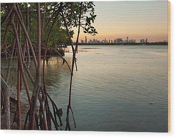 Sunset At Miami Behind Wild Mangrove Forest Wood Print by Matt Tilghman