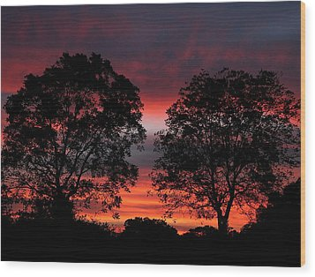 Sunset Behind Two Trees Wood Print by Sheila Brown