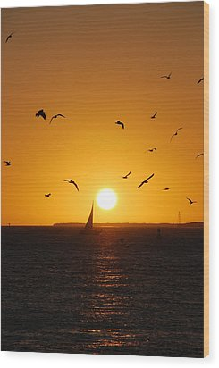 Sunset Birds Key West Wood Print by Susanne Van Hulst