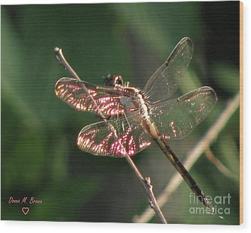 Wood Print featuring the photograph Sunset Dragonfly by Donna Brown
