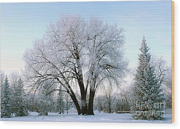 Sunset Frost Wood Print by Steve Augustin